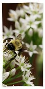 Bumble Bee On Wild Onion Flower Beach Towel