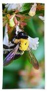 Bumblebee On Abelia Beach Towel