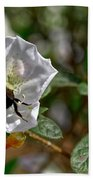 Bumblebee On White Azalea Beach Towel