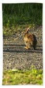 Bunny Eating On The Run Beach Towel