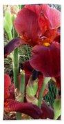Burgundy Iris Flowers Beach Towel