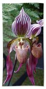 Burgundy Orchids With Stripes Beach Towel