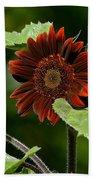 Burgundy Red Sunflower Beach Towel