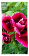 Burgundy Rose And Rose Bud Beach Towel