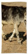 Burro Playing With Safety Cone Beach Towel