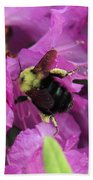 Busy Bee Collecting Pollen On Rhododendron  Beach Towel