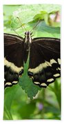 Butterflies Live - 8 Beach Towel
