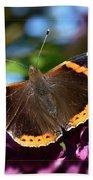 Butterfly 12 Beach Sheet
