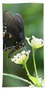 Butterfly 140 Beach Towel