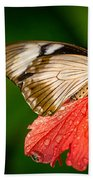 Butterfly 24 Beach Towel