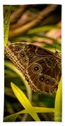 Butterfly 25 Beach Towel