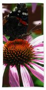 Butterfly And Pink Cone Flower Beach Towel