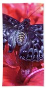 Butterfly Blues - Constable  Beach Towel