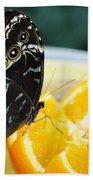 Butterfly Haven Citrus Beach Towel
