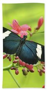 butterfly in Square Beach Towel