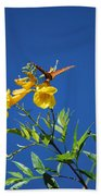 Butterfly In The Sonoran Desert Musuem Beach Towel