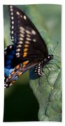 Butterfly Laying Eggs Beach Towel