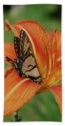 Butterfly On A Blooming Orange Daylily Flower Blossom Beach Towel