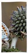 butterfly on a Echinops adenocaulon Beach Towel