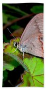 Butterfly On Geranium Leaf Beach Towel