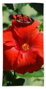 Butterfly On Hibiscus Beach Towel