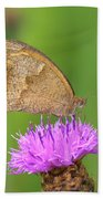 Butterfly On Knapweed Beach Towel