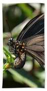 Butterfly Surprises Beach Towel