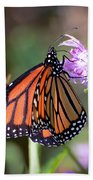 Butterfly - The Monarch  Beach Towel