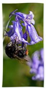 Buzzy Bee On Bluebells Beach Towel