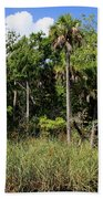 Cabbage Palms Along The Cotee River Beach Towel