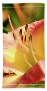 Cabbage White Butterfly On Day Lily Beach Towel