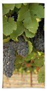Cabernet Grapes One Beach Towel