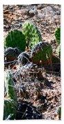 Cactus, Arches National Park Beach Towel