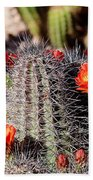 Cactus Bloom 033114f Beach Towel