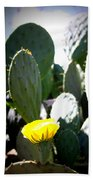 Cactus Bloom Beach Towel