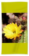 Cactus Blooms Yellow 050214g Beach Towel