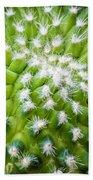 Cactus Feathers Beach Towel