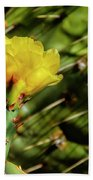 Cactus Flower H28 Beach Towel