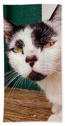 Cafe Cat  Beach Sheet