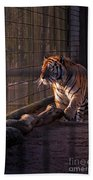 Caged King Of The Jungle Beach Towel