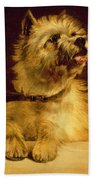 Cairn Terrier   Beach Towel