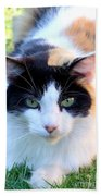 Calico 2 Beach Towel