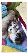 Calico Kitten On Towels Beach Towel by Garry Gay