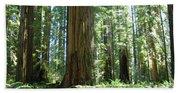 California Redwood Forest Trees Art Prints Beach Towel
