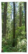 California Redwood Trees Forest Art Prints Beach Towel