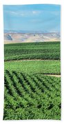 California Vineyards 1 Beach Towel