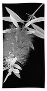 Callistemon Beauty 1 Beach Towel