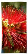Callistemon Beach Towel