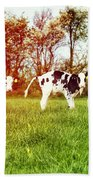Calves In Spring Field Beach Towel