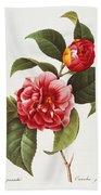 Camellia, 1833 Beach Towel